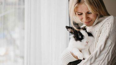 Por que mi conejo es agresivo